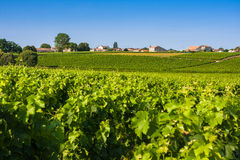 Vineyard landscape near Bordeaux, France Stock Images