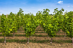 Vineyard landscape near Bordeaux, France Stock Photo