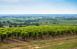 Vineyard landscape near Bordeaux, France Stock Image