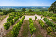 Vineyard landscape near Bordeaux, France Stock Photography