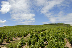 Vineyard Landscape near Fleurie Stock Photography
