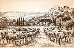 Vineyard landscape on old paper Stock Photography