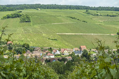 Vineyard landscape in region Alsace near village of Barr Stock Image