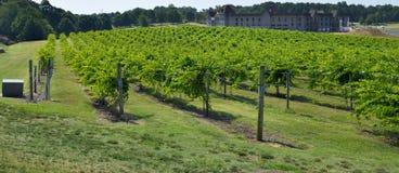 Vineyard landscape Stock Image