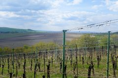 Vineyard landscape. Vineyard rows of vines visible on the background. Vineyard landscape with blue sky. Vineyard rows of vines visible on the background stock photos