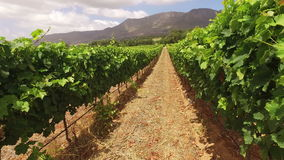 Vineyard landscape - South Africa stock video