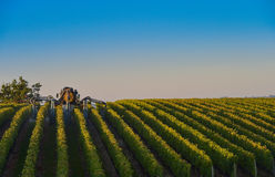 Vineyard landscape-Spraying of grapevines-Vineyard south west of Royalty Free Stock Photography