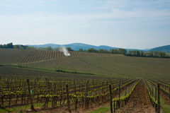 Vineyard Landscape, Strove, Tuscany. Royalty Free Stock Image
