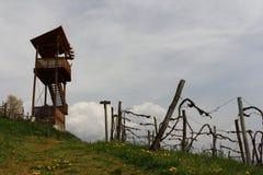 Vineyard Landscape. In Styria Austria Royalty Free Stock Image