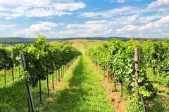 Vineyard landscape. Summer in Europe. Viticulture in Burgenland, Austria stock images