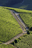 Vineyard landscape summer. Summer in the Langhe countryside wine in Piedmont Royalty Free Stock Photo