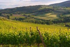 Viineyard landscape in Tuscany royalty free stock photos