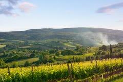 Viineyard landscape in Tuscany stock photography