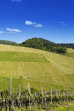 Vineyard landscape in summer Royalty Free Stock Photo