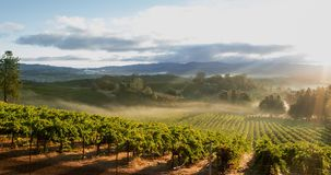 Vineyard Landscape Sunrise stock video footage
