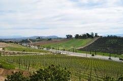 Vineyard Landscape in Temecula Royalty Free Stock Photo