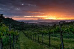 Vineyard landscape in Tuscany, Italy. Misty sunrise. In fields royalty free stock photography
