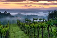 Vineyard landscape in Tuscany, Italy. Misty sunrise. In fields royalty free stock images