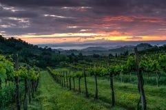 Vineyard landscape in Tuscany, Italy. Misty sunrise. In fields royalty free stock photo