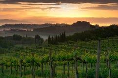 Vineyard landscape in Tuscany, Italy. Misty sunrise. In fields stock image
