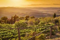 Vineyard landscape in Tuscany, Italy. Wine farm at sunset Royalty Free Stock Photography