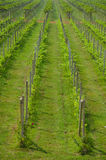 Vineyard landscape Royalty Free Stock Images
