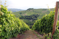 Vineyard landscape royalty free stock photo