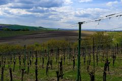 Vineyard landscape. Vineyard rows of vines visible on the background. Vineyard landscape. Vineyard rows of vines visible on the background Stock Photo