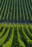 Vineyard landscape-Vineyard south west of France, Bordeaux Viney Stock Images