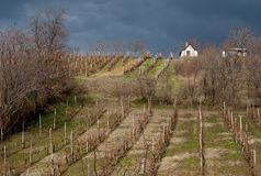 Vineyard. Landscape with vineyard and white house on a hill. cloudy skies before the storm Royalty Free Stock Images