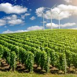 Vineyard landscape with wind generators Royalty Free Stock Images