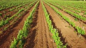 Vineyard Lanes in Spring Aerial Drone View stock video