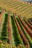 Vineyard in Langhe, Italy Royalty Free Stock Images