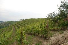 Vineyard of Langhe, Piedmont - Italy Stock Photo