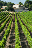 Vineyard in Languedoc-Roussillon (France) Stock Photos