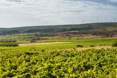 Vineyard in Languedoc-Roussillon (France) Royalty Free Stock Images