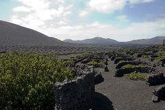 Vineyard in Lanzarote Royalty Free Stock Photo