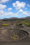 Vineyard in Lanzarote Stock Photography