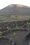 Vineyard at Lanzarote, Canary Islands Royalty Free Stock Photos