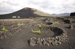 Vineyard at Lanzarote, Canary Islands Royalty Free Stock Photos
