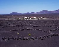 Vineyard, Lanzarote. Stock Photography