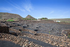 Vineyard on Lanzarote Stock Images