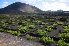 Vineyard, Lanzarote Royalty Free Stock Photos