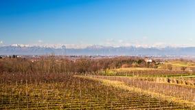 Vineyard in late winter Stock Photos