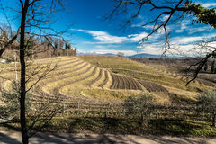 Vineyard in late winter Royalty Free Stock Photos