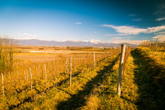 Vineyard in late winter Royalty Free Stock Photography