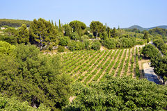 Vineyard of Le Castellet In France Stock Photography