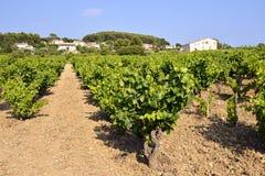 Vineyard of Le Castellet In France Royalty Free Stock Image
