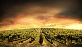 Vineyard Light Royalty Free Stock Photos