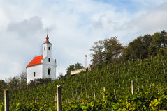 Vineyard with little church on the top Royalty Free Stock Photo
